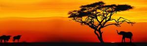del-afrika-a-szivarvanyorszag-nagy